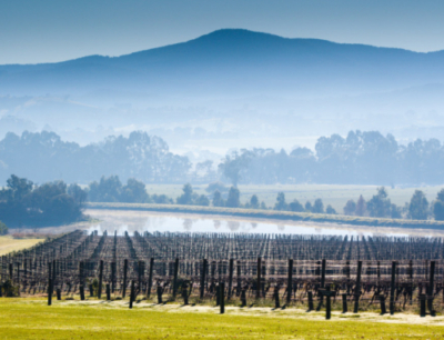 yarra-valley-25504924_large-500x383